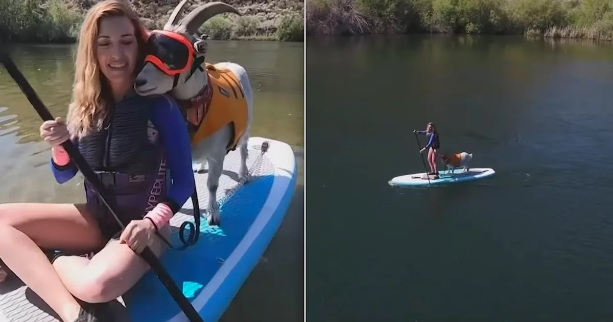 Meet Mr. Mayhem: The Paddle-Boarding Goat From Idaho Who Is Inseparable From His Human, Alyssa Kelley