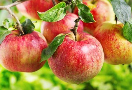 التهديدات الأمريكية تمنع تجاراً أردنيين من استيراد كميات كبيرة من تفاح السويداء