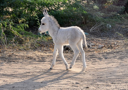 Cute Wallpapers Of Kittens And Puppies Cute Donkey Kitten And Puppy
