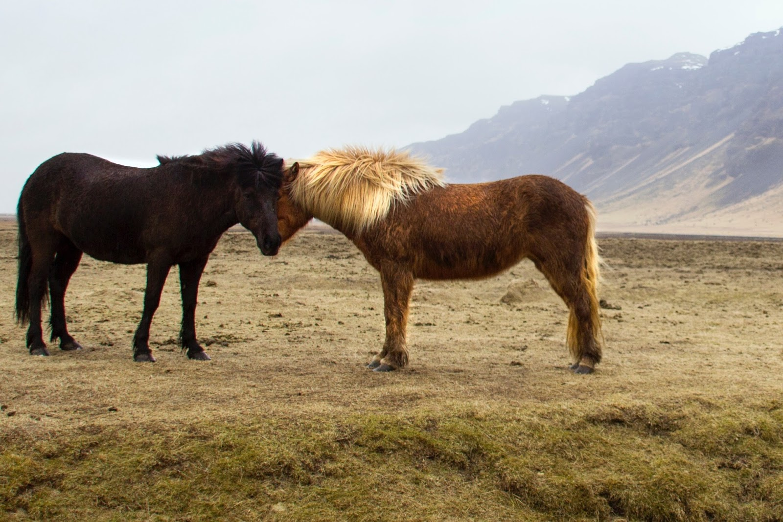 ambient guitar music by whispersinspace: Whisper 10 - Horses