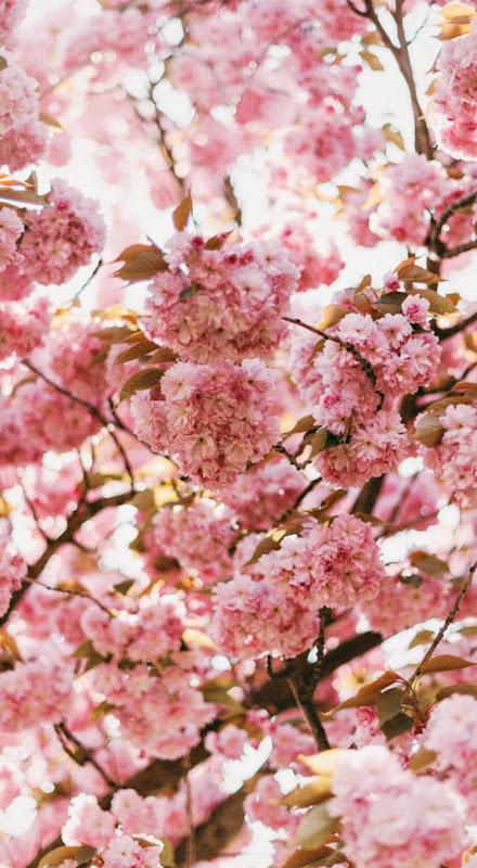 Spring Nature Bokeh Hd Wallpaper Genius Wallpapers