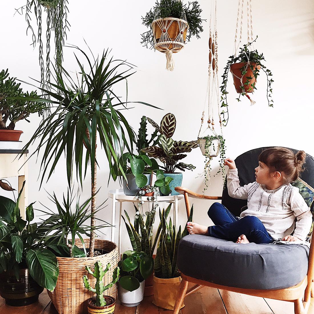 Jungla urbana y plantas de interior
