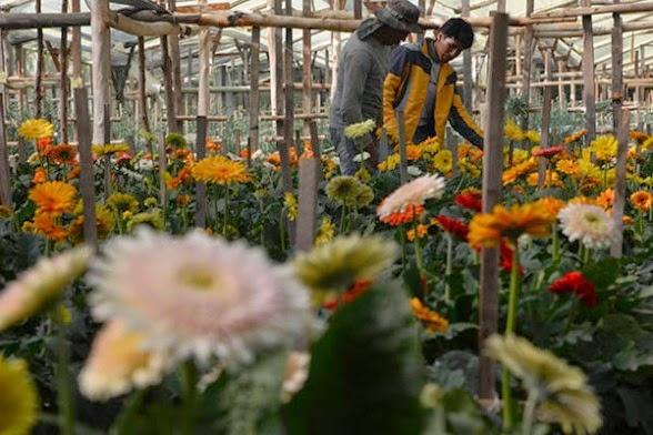 Resultado de imagen para Los bolivianos cultivan la mitad de las plantas y flores