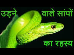 flying snake photo