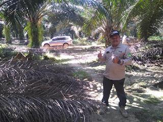 JUAL OBAT UNTUK MENGATASI JAMUR GONODORMA PADA SAWIT DI Kikim Timur, Lahat 082334020868