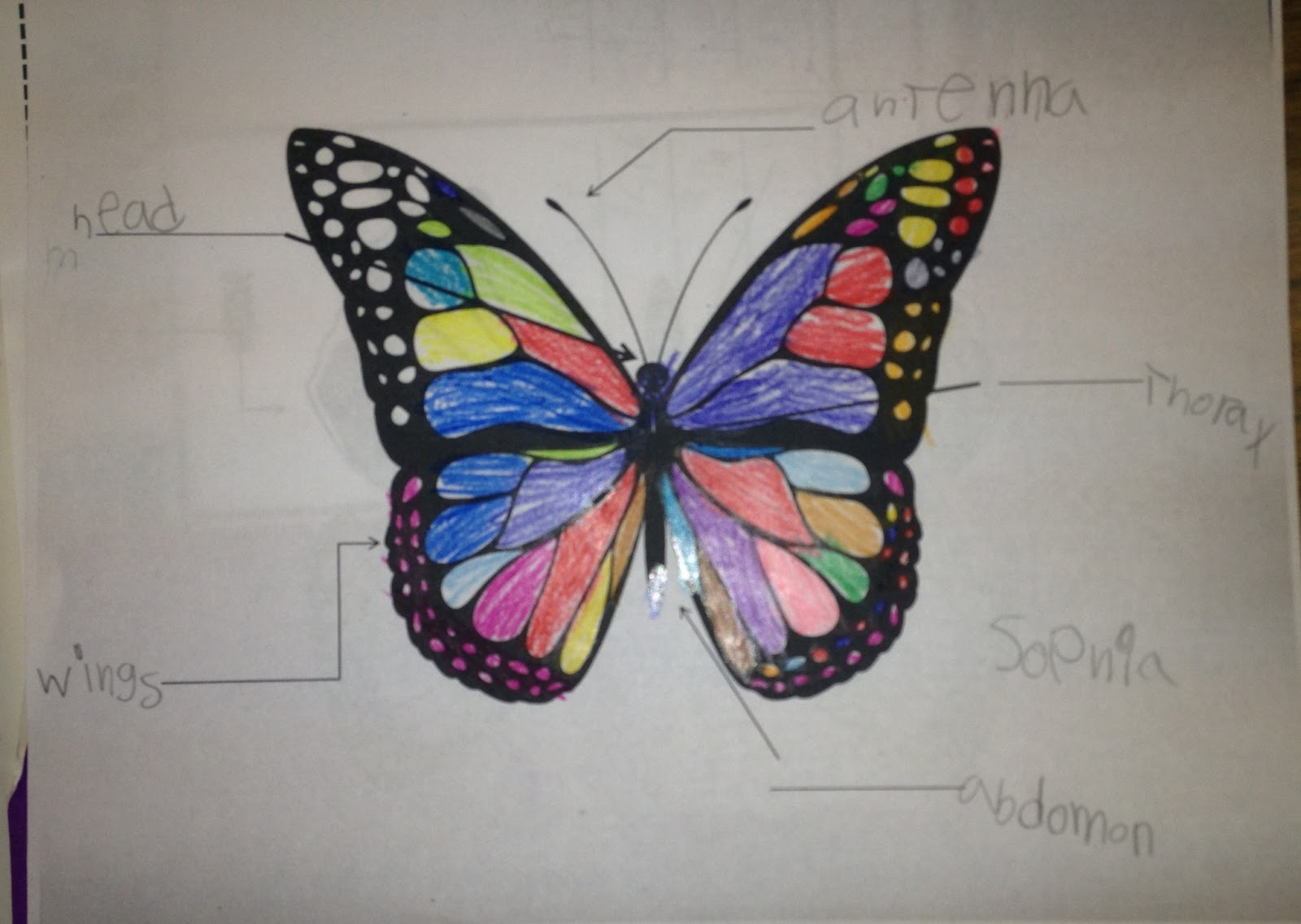 parts of a butterfly diagram analog data acquisition system block carolina teacher butterflies and fairytales