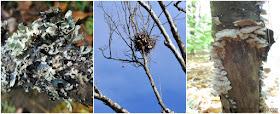 Fall Nature Scavenger Hunts