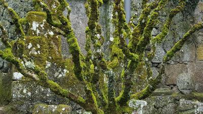 Gouveia, mossy garden