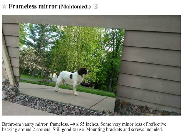 dogs reflection in a mirror