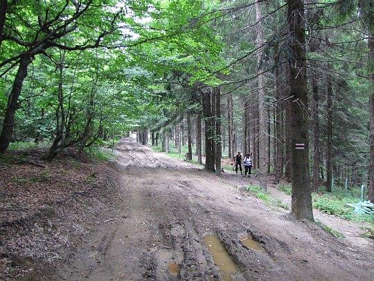 Szlak z Wierchu nad Kamieniem.