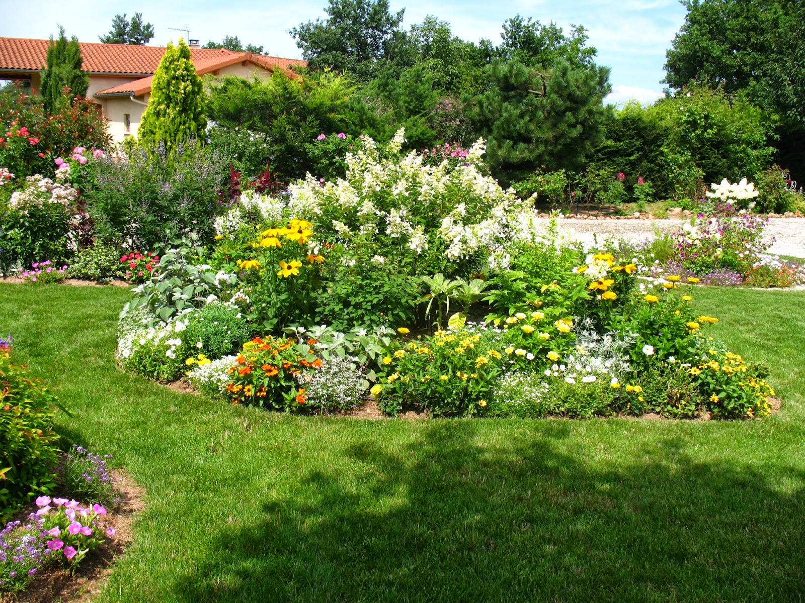 Roses du jardin ch neland cr ation d 39 un massif jaune et blanc for Association plantes jardin