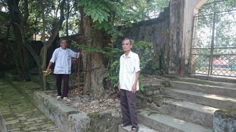 Người dân làng Phụ Chính muốn bán đấu giá cây sưa - báu vật của làng