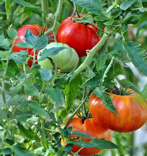 http://tomatprat.blogspot.no/2016/02/sicilian-saucer-biff-tomat.html