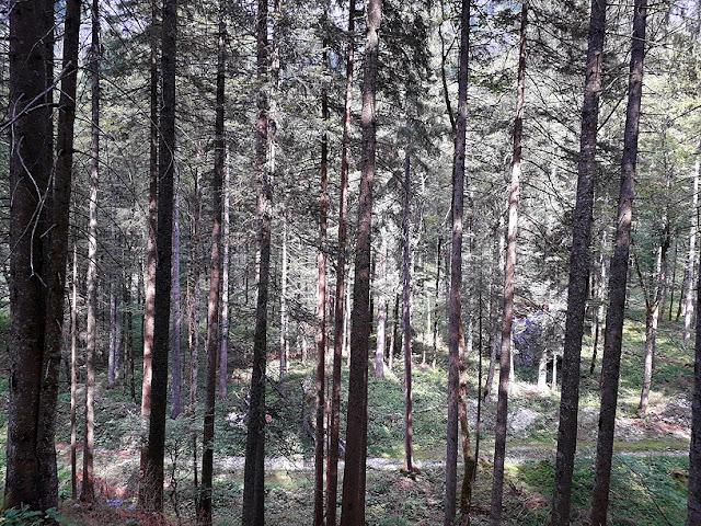 The forest outside Lunz am See / photo S. Mazars