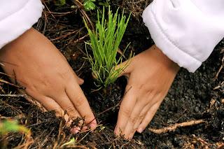 Resultado de imagen de soluciones para la deforestacion
