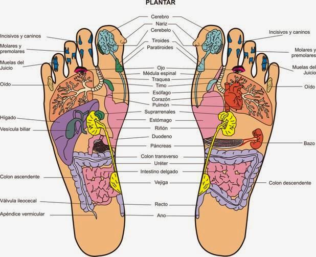 tengo dolor en la planta del pie derecho