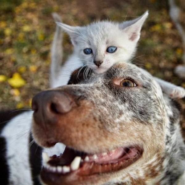 cat and dog best friends