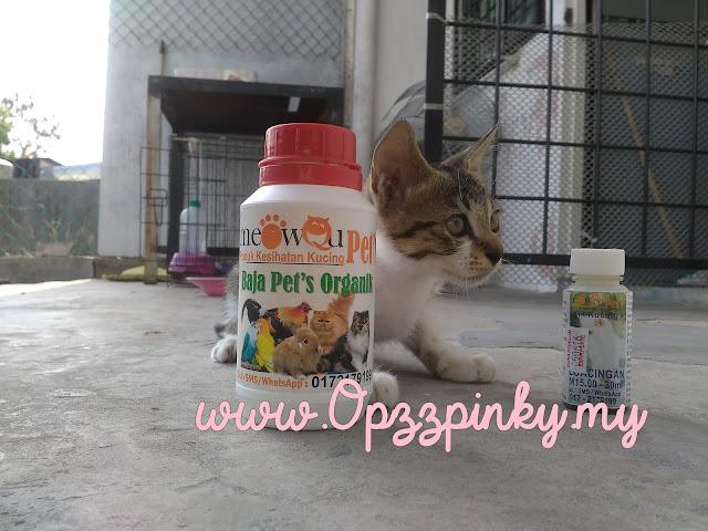 Masalah dan Penyelesaian Kecacingan Bagi Anak Kucing