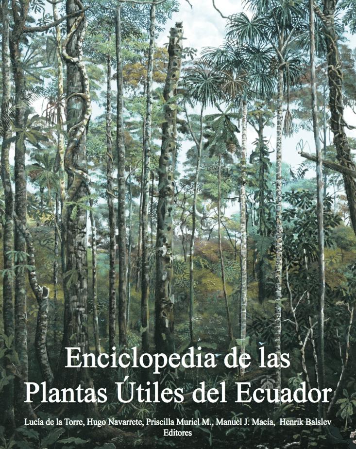 Famoso Cómo Es El Estudio De La Anatomía De Las Plantas útiles Para ...