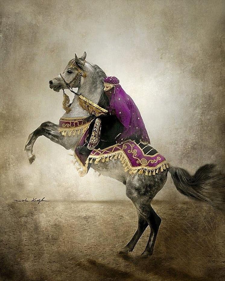 Cuadros modernos pinturas y dibujos caballos arabes - Fotos en cuadros ...