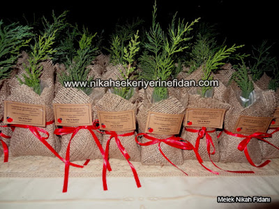 İstanbul filiz Serkan nikah bitkisi fidanı - 1