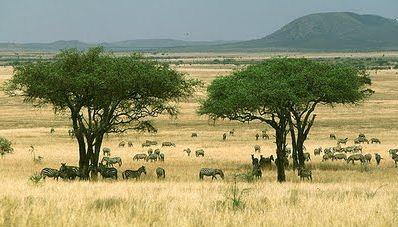 Macam Macam Jenis Ekosistem Alami Dan Buatan Berpendidikan