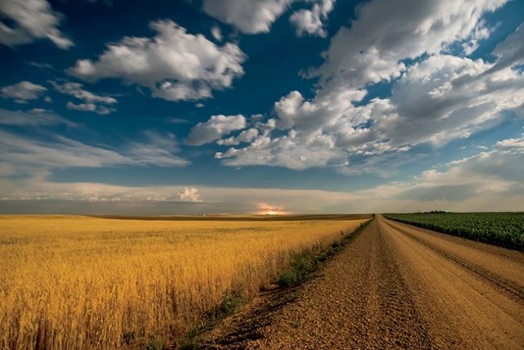 http://farmflavor.com/us-ag/nebraska/top-crops-nebraska/nebraskas-amber-waves-grain/