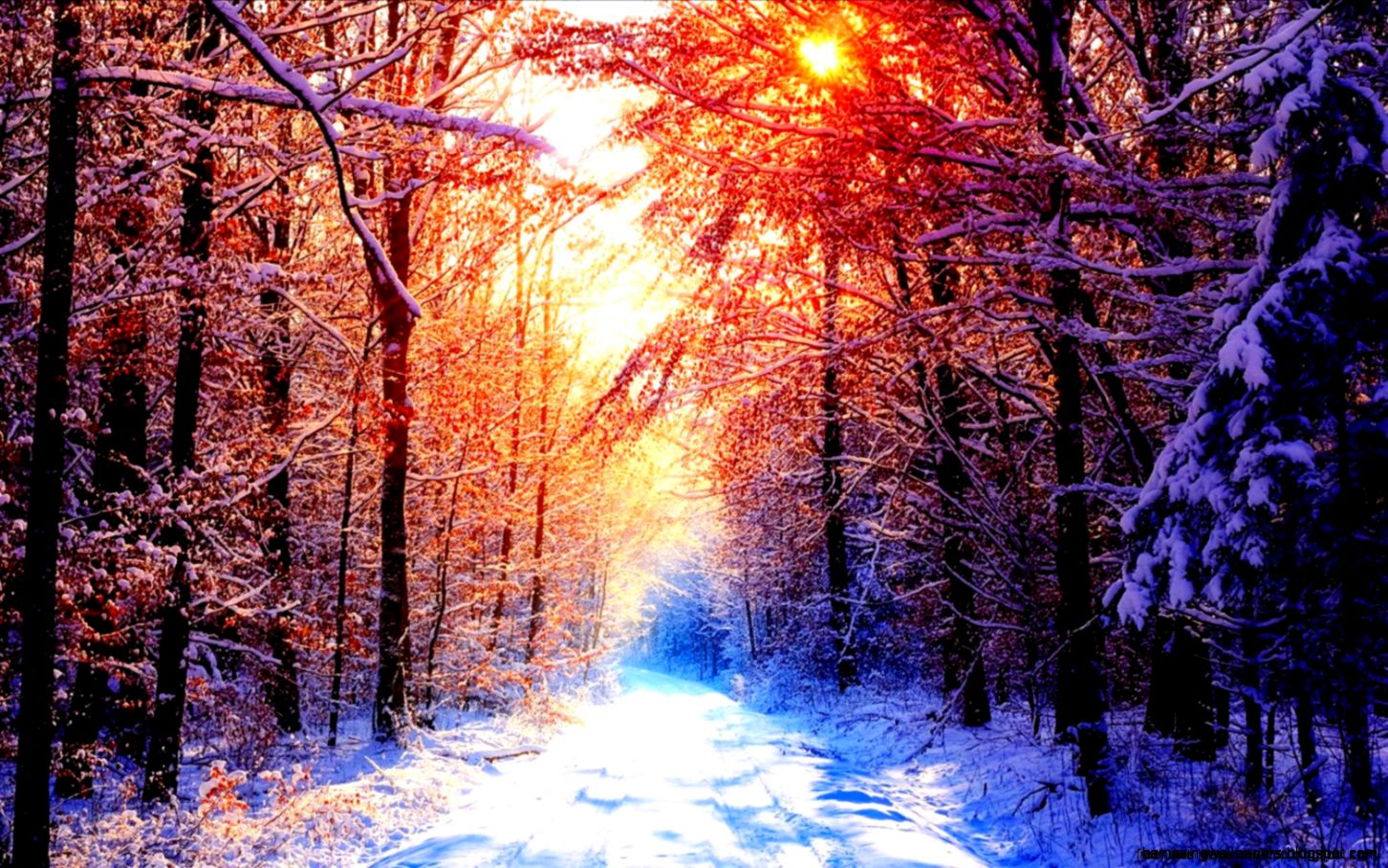 Winter Snow Scenes Sunset