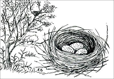 nidos de Cardenal Paroaria coronata