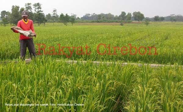 petani majalengka senang dengan sistem baru penyaluran pupuk subsidi