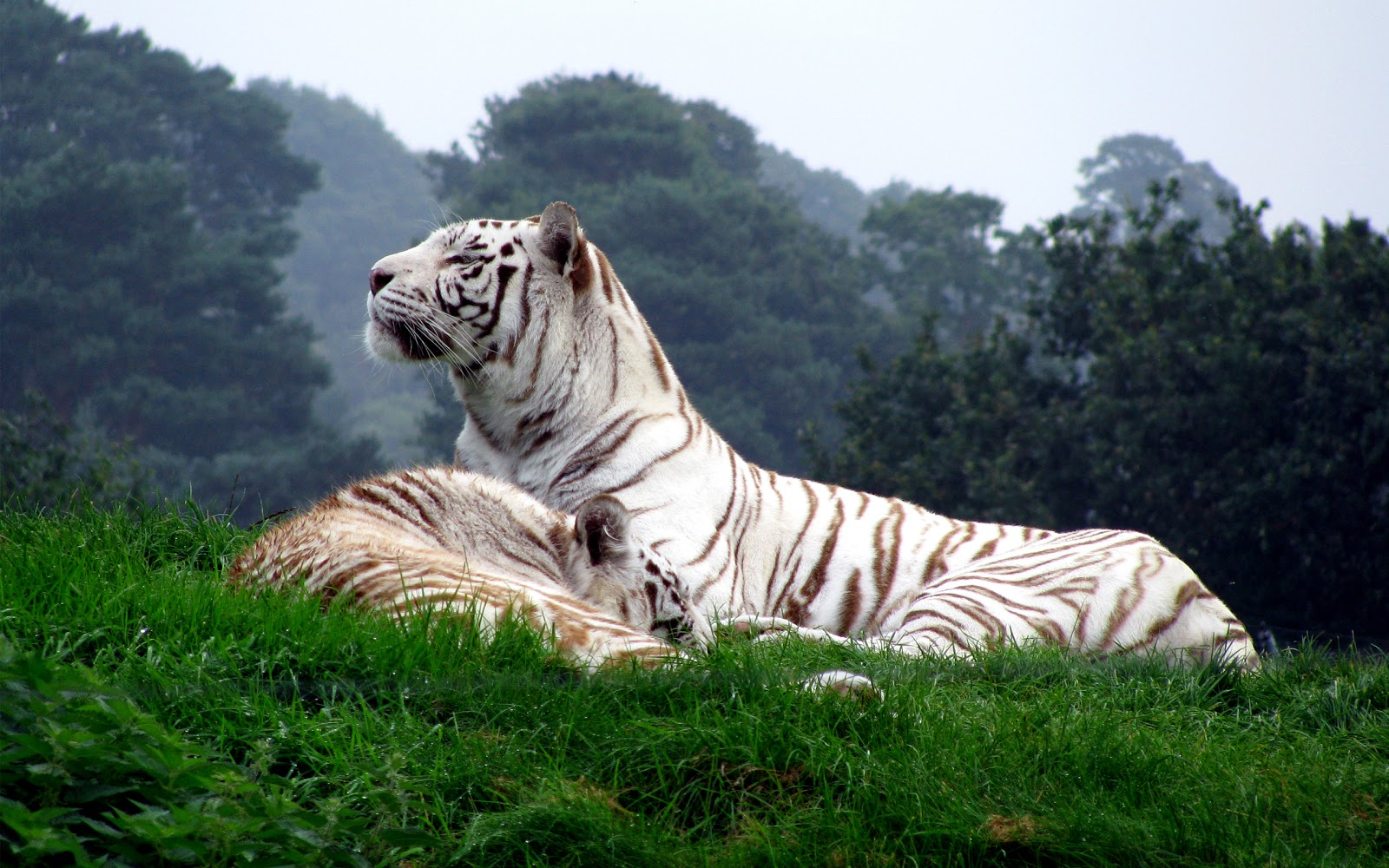 I Think The Most Beautiful Pictures Are Those Made In Nature Nothing Compare With Expression Of An Animal Below You See Super Collection Animals