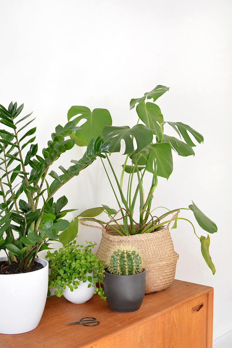 How to care for indoor plants burkatron for Indoor plant maintenance