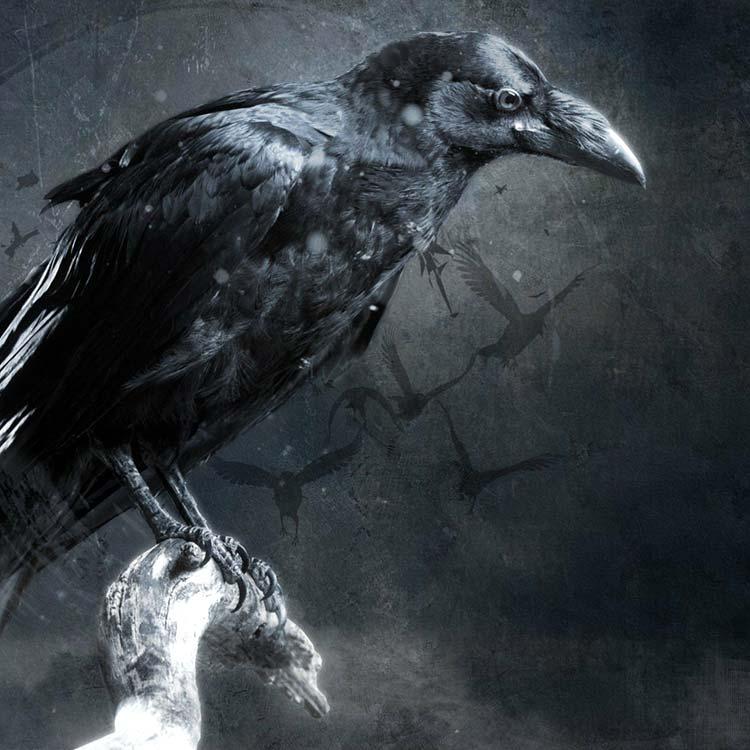 Crow Wallpaper Engine