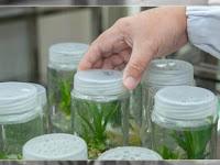 Prinsip Dasar dan Manfaat Bioteknologi-Materi Biologi Kelas XII SMA-MA