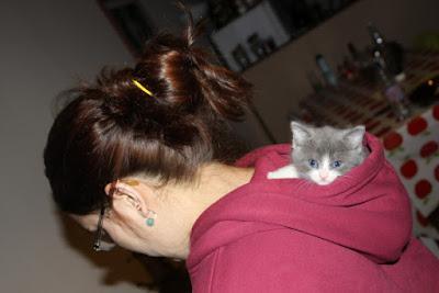 Imagen tierna de gatito regalon