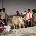 پرتشدد گئو رکشک ہندوؤں کو جھوٹا ثابت کر رہے ہیں