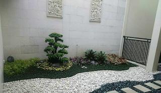 taman kering dengan bonsai dollar mungil