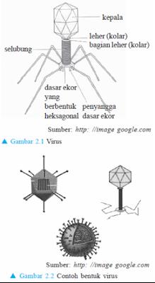Ciri-Ciri, Bentuk dan Ukuran Tubuh Virus