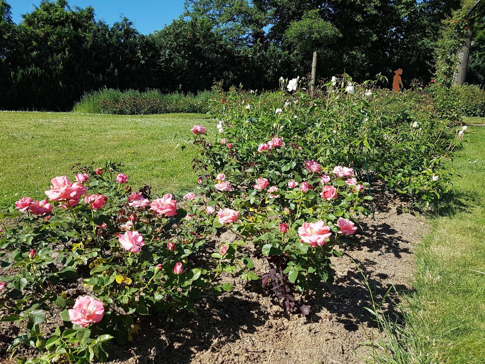Les petites croix de haute savoie les fleurs en alsace - Jardin botanique de saverne ...
