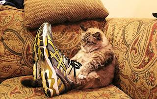 靴が大好きな可愛い猫1