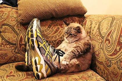 靴が大好きな可愛い猫