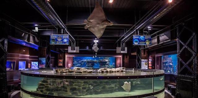Aquarium Wedding Venues greater cleveland aquarium