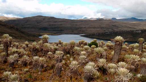 Autoridades ambientales reiteran que el Páramo de Sumapaz no es apto para turismo
