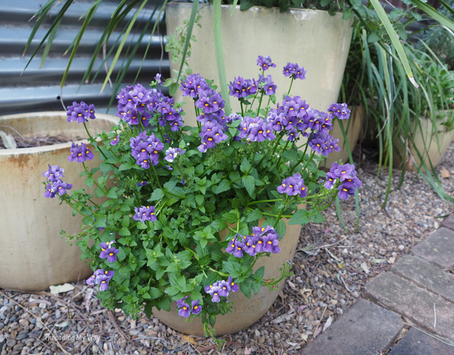 Integrating container planters into a garden ~ Threading My Way