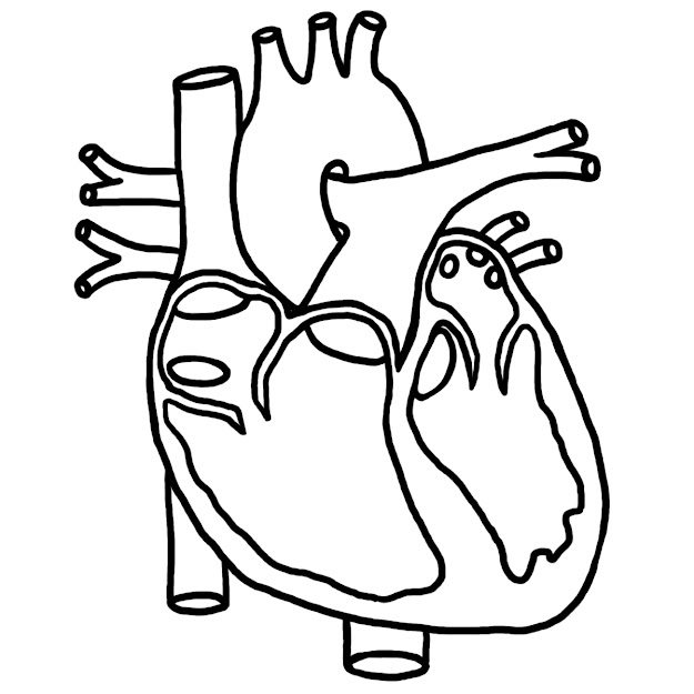 Coloring Pages Of The Human Heart For Kidskidsfreecoloringnet