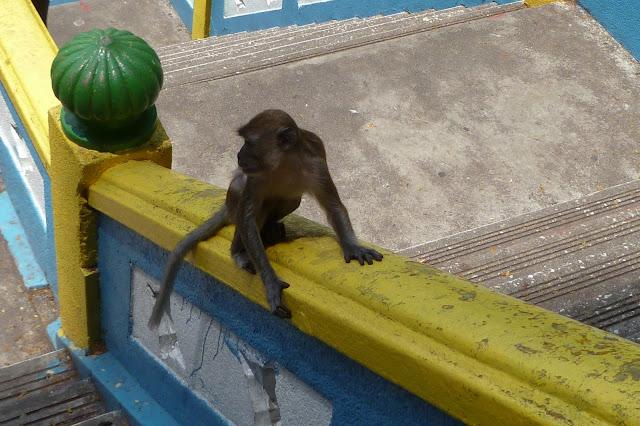 Małpa w Batu Caves