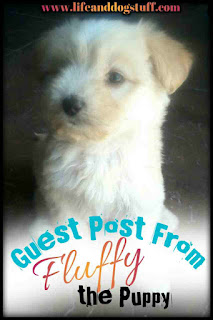 Guest Post From Fluffy The Puppy