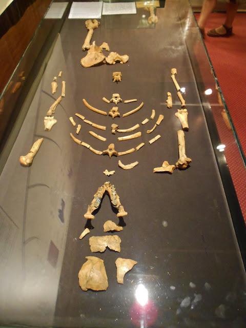 Fosil Lucy si Australopithecus