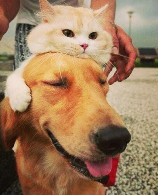 Ai bảo ghét nhau như chó mèo