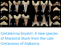 http://sciencythoughts.blogspot.co.uk/2018/01/cretalamna-bryanti-new-species-of.html